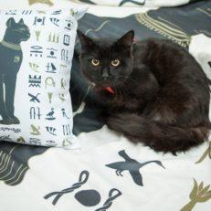 Сувенирная продукция для магазина при музее Эрмитаж с принтами «Эрмитажные коты»