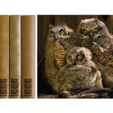 Айдентика для издательства «Три совы»