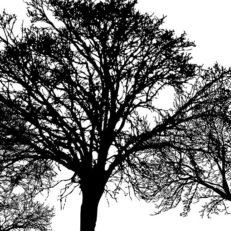 Коллекция принтов Trees